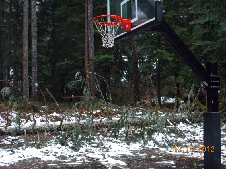 Fallen tree near basketball courts at camp
