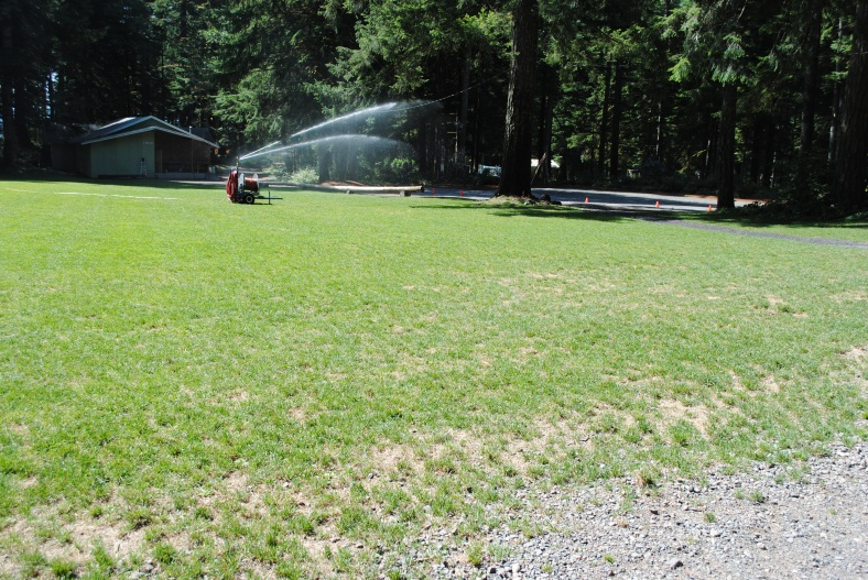 Watering the lawns, fertilizing, seeding, aerating and time will restore fields.