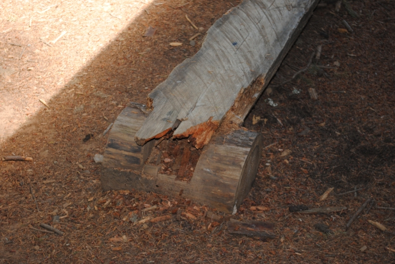 wood bench needs replaced after about 12 years of service to the camp!