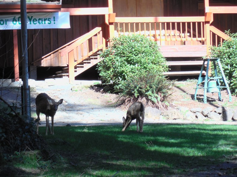 Twins munch on Camp Howard edibles as their Mother keeps an eye just outside the photo.